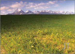 Hillside Fields (Meadows) 13