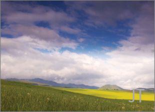 Hillside Fields (Meadows) 14