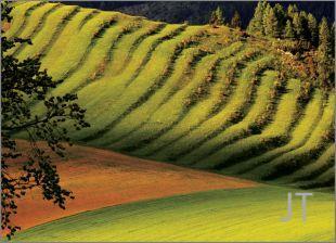 Hillside Fields (Meadows) 17