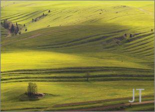 Hillside Fields (Meadows) 19