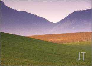 Hillside Fields (Meadows) 2