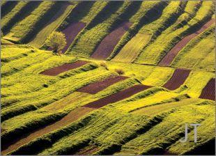 Hillside Fields (Meadows) 20