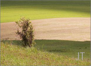 Hillside Fields (Meadows) 21