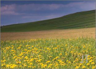 Hillside Fields (Meadows) 25