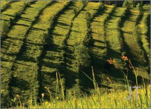 Hillside Fields (Meadows) 26