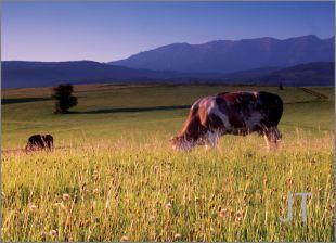 Hillside Fields (Meadows) 32