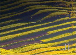 Hillside Fields (Meadows) 9